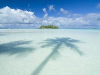 Proshots - Palm Tree Paradise, Tahiti - Professional Photos