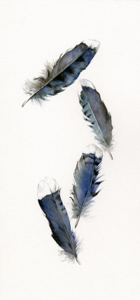 Blue Jay Feathers Archival print by amberalexander on Etsy