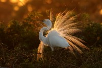 14 Big Birds Captured in Action in Stunning 1150 Pixel Photographs   Photography Magazine PhotoExtract