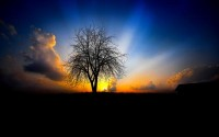sunsets,landscapes sunsets landscapes nature trees photography sunbeams 2560x1600 wallpaper – Sunsets Wallpaper – Free Desktop Wallpaper