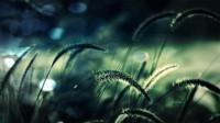 grass grass 1920x1080 wallpaper – Grass Wallpaper – Free Desktop Wallpaper