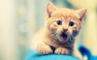 animals,cats cats animals kittens 1920x1200 wallpaper – Cats Wallpaper – Free Desktop Wallpaper