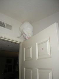 Weird Cat - Craized.com