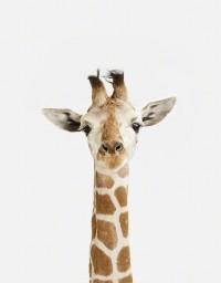 Most Adorable Baby Animal Prints - My Modern Metropolis