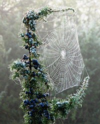all the pretty things. / spider web.