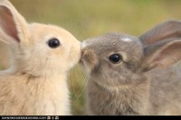 Animals / bunny kiss