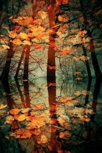 Autumn Colours on