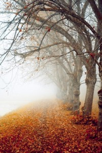 Autumn / foggy autumn morning