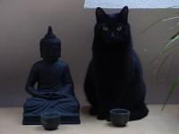 Black Cat / buddha-meditation.jpg (JPEG Image, 500x375 pixels)