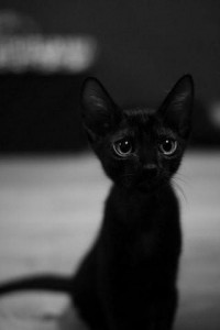 Black Cat / little little black cat