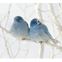 BLUE DREAMING BLUE / Birds of a Feather... | Flickr - Photo Sharing!
