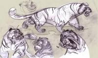 Character Design / Animals