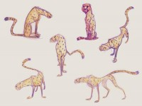 Character Design / Cats