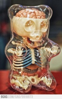 Disturb The Comfortable / Anatomy of a gummy bear...haha