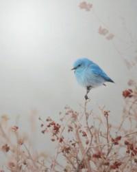 Eloquent Creations ???????? / Blue Mountain Mist