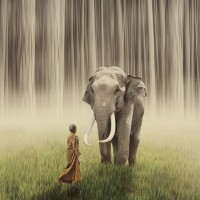 Eloquent Creations ???????? / Monk and Elephant