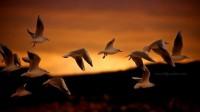 Eloquent Creations ???????? / Seagull escape