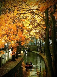 Fabulous Fall Foliage / Utrecht, Netherlands. Pretty Fall Colors on the canal.