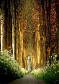 Fairy Tale / Tree Tunnel, Belgium