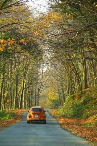 Fall in love with fall / Orange VW Beetle and a scenic drive