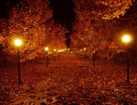 FALL into AUTUMN / Nothing better than a romantic fall night...