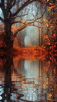 Falling into Autumn / 15 Amazing Photos You'll Never Forget - View of Autumn