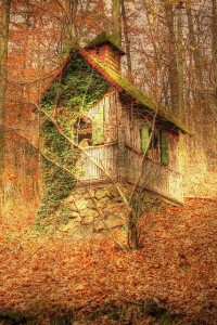 Falling into Autumn / Cabin in the Woods