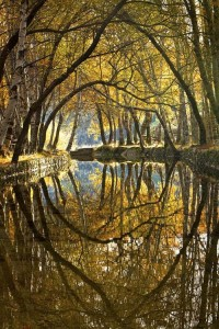Falling into Autumn / River Reflection, Serra da Estrela, Portugal
