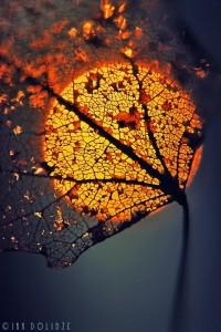 Falling into Autumn / sunset