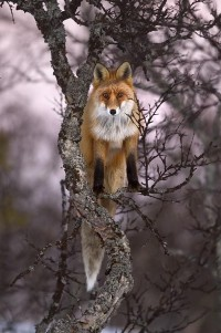 Favorite Wild Animals / Pixdaus, page 5 of nature photography site photos