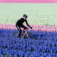 Flowers and Bikes! Beautiful Shot taken by Jered Gruber. | Bicycles