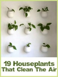Garden / 19 Houseplants That Clean the Air