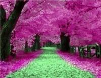 Garden / BEAUTIFUL
