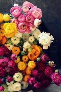 garden favorites / Loads of Ranuncks | Flickr - Photo Sharing!