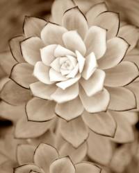 """Garden / ivory """"Desert Rose"""""""