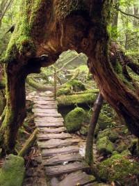 Garden / stairs