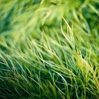 { grass color } /