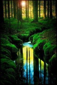Green Love / Creek in the Woods