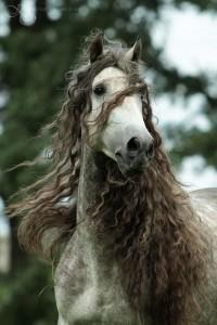 HORSE / KELLY