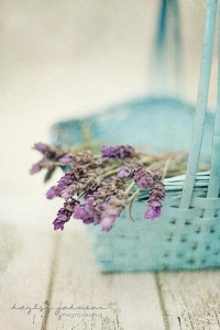 I LOVE colours / Lavender with Turquoise