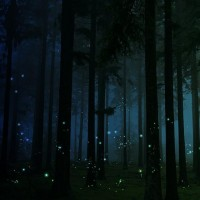 Imagery of a Dream / firefly forest | Flickr - Photo Sharing!