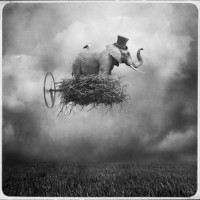 Imagery of a Dream / flying elefant nest