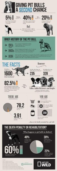 Infographics / The Truth About Pit Bulls — Designspiration