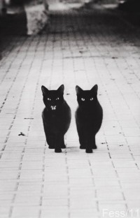 It's All in Black & White / walking down these streets like we own'em