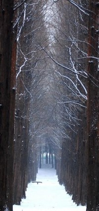Let It Snow / Winter path