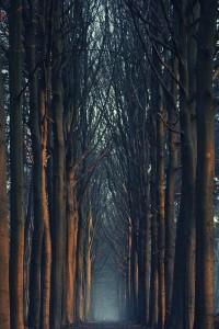 Na†ural Beau†y / Trees in Bruges, Belgium