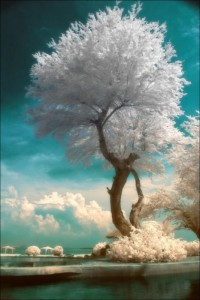 Nature and soul serenity / Tree