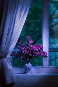 P For Purple /