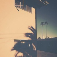 Palm Trees | Flickr - Photo Sharing! — Designspiration