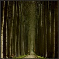 Pathways' Glory / It reminds me of a magnificent outdoor cathedral